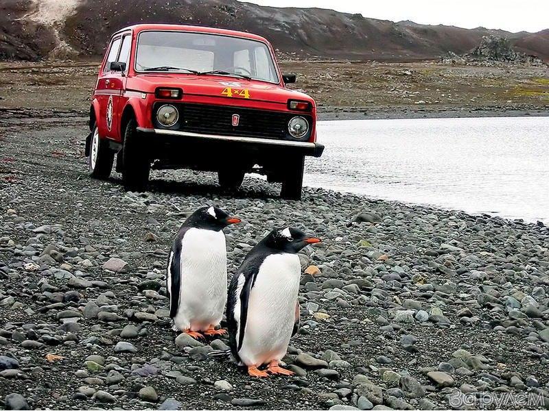 Lada Niva az anatktiszon Pingvinekkel
